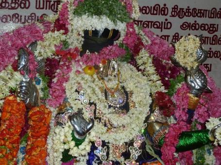 மாயிமகமாரியம்மா கோலியனூர் மாரியம்மா