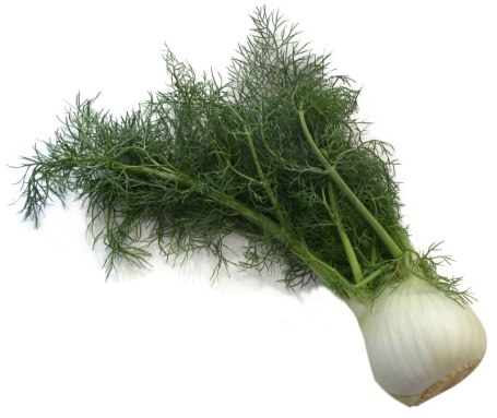 fennel-high-rez